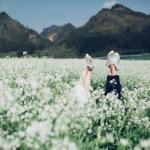 Mộc Châu đẹp say đắm lòng người qua bốn mùa hoa nở