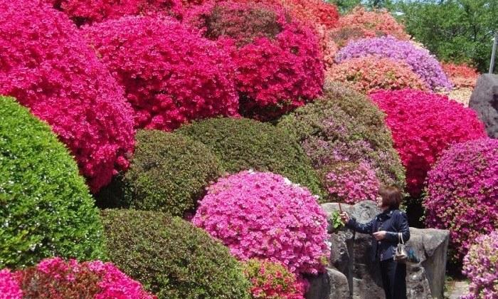 Đến Niigata và Nagano ngắm hoa, tuyết cuối mùa