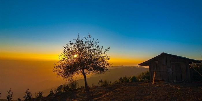 Sống ảo cực đẹp với cây cô đơn lý tưởng ở đất Việt