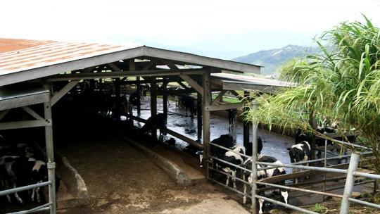 Desa-Dairy-Farm-3