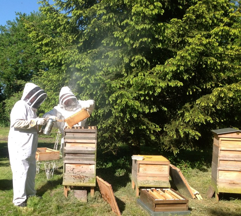 Bee_keeping_at_Primrose_Cottage,_Little_OAKLEY,_Northants.