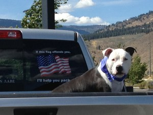 american flag dog and truck help you pack