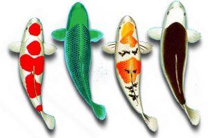 Корма для прудовых рыб