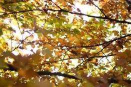 Die Sonne mit Blättern verkleidet
