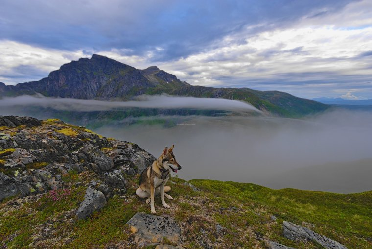 Northern Inuit, Barden (659m), Island of Senja, Troms og Finnmark, Norway - ...behind every picture, there is a story...