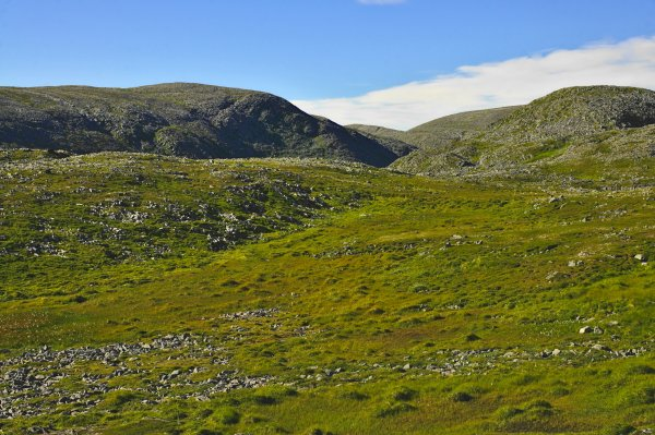 Tundra between and Gamvik, Mehamn, Nordkinn peninsula, Troms og Finnmark, Norway - ...behind every picture, there is a story...