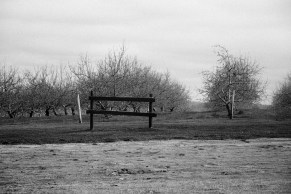 Brookfield Orchard