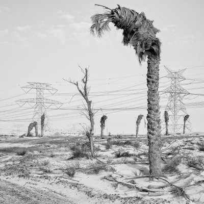 Dead palm trees at a road intersection, Dubai, UAE