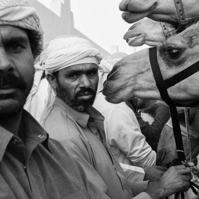 'Camel Farmers' part of the project 'From the inside out' by Duncan Chard