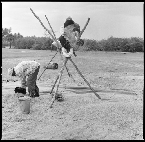 Sri Lanka, Rice, Hasselblad, Black and white, Film, Duncan, Duncan Macfarlane Photography, Duncanm