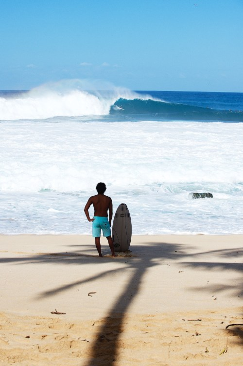 Josh Moniz, Palm tree, North Shore, Oahu, Surf, prints, surfing photography, Surf, wave, Ocean, Duncan Macfarlane, Surf Photography, wave, Duncan Macfarlane Photography, Duncan, Photography, Hawaii, Pipeline, Duncanm, art, fine art, Surfing
