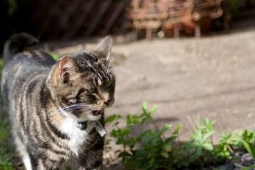 Essie the cat