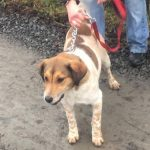 Honey was a surrender to the Louth County Pound