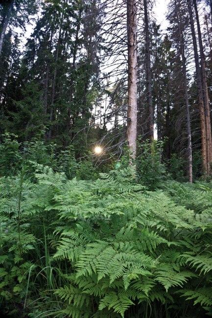 в лесу у болота