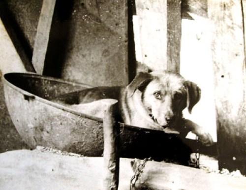 пес, живущий в казане