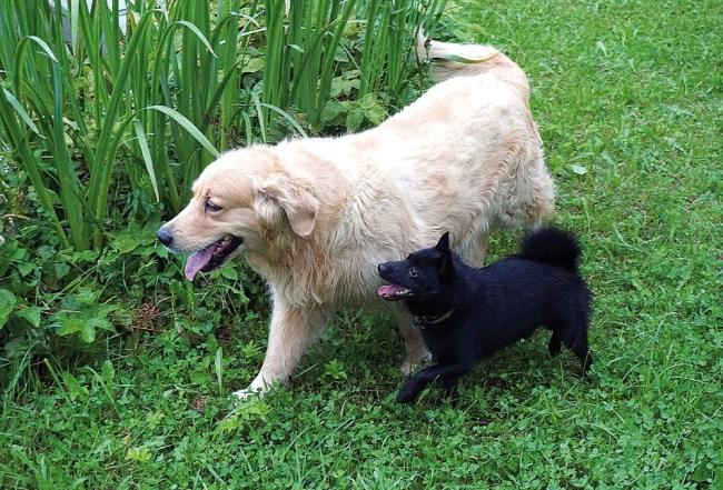 Почо и его друг Нильс