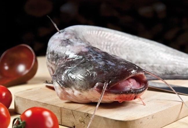 подготовка сома для рыбной шурпы с поджаркой