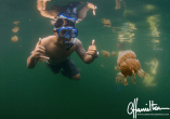 Swinning with stingless jellyfish in Indonesia