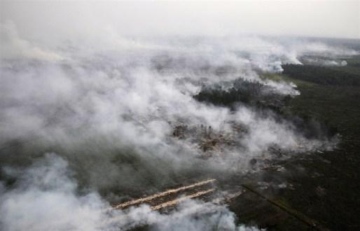 Greenpeace: Sejumlah Perusahaan Sawit dan Bubur Kertas Lolos dari Sanksi Karhutla