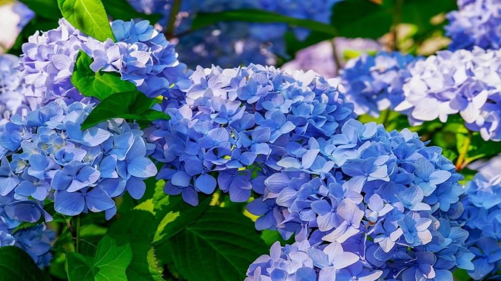 Jenis bunga yang cantik tapi mematikan
