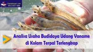 Analisa Usaha Budidaya Udang Vaname di Kolam Terpal Terlengkap