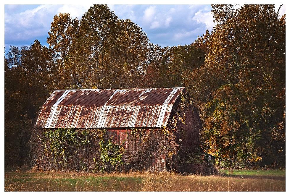 calvert county photography (3)