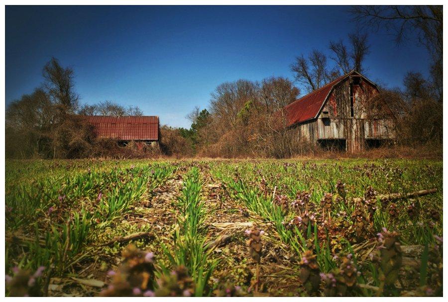 calvert county barns-18