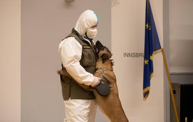 Коронавирус по запаху – овчарку научили определять маски, зараженные коронавирусом