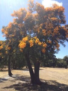 golftree
