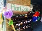 Plant Sale at the Siskiyou Arts Museum (SAM)