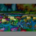 Marblehead lily pads by Robert Mullenix / Dunwanderin Digital Studio