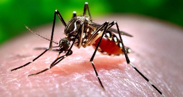 کراچی میں مزید 91 افراد ڈینگی وائرس کا شکار