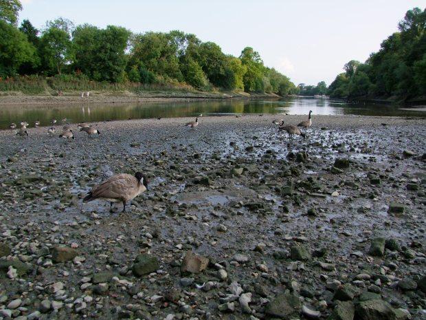 tamiza-rzeka-isleworth-londyn-natura-atrakcje-londynu-anglii-wielka-brytania-brentford