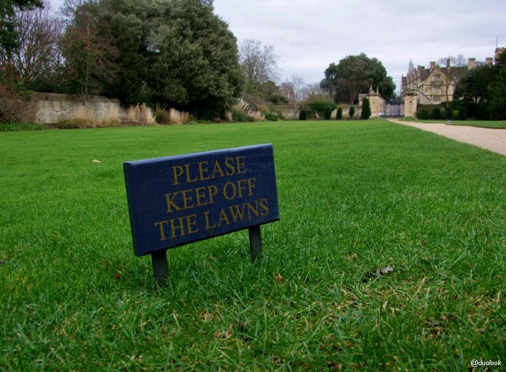 angielski trawnik Oksford