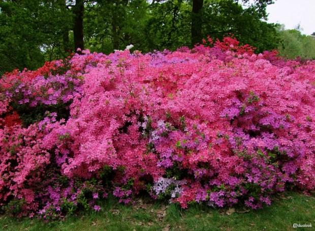 isabella-plantation-richmond-park-londyn-natura-14