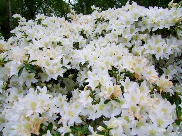 isabella-plantation-richmond-park-londyn-natura-19