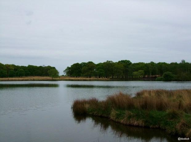 richmond-park-londyn-natura-pen-ponds-jezioro-staw-zbiornik-wodny-20