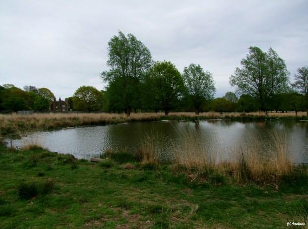 richmond-park-londyn-natura-zwiedzanie-atrakcje-09
