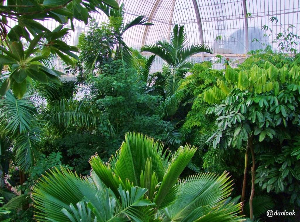 palmy londyn atrakcje kew gardens