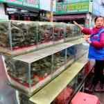 Jing Shen – największy targ rybny w Pekinie