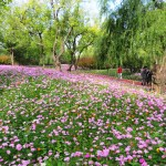 Parki w Pekinie