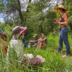 Modern Herbalism in the Southwest