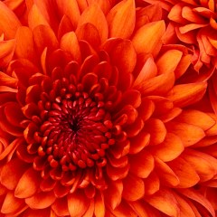 Flowers – A remedy you've likely never heard of