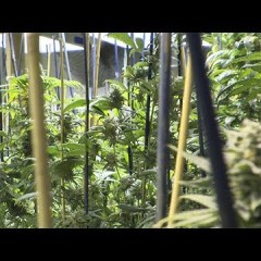 Marijuana Industry Vows to Fight New Pot Taxes