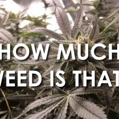 Colorado Marijuana Laws – Durango, Colorado