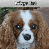 Bailey's Bits – Bailey on Retirement