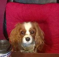 Bailey's Bits: Bailey on Banks