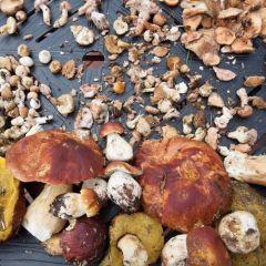 Mushroom & Wine Festival