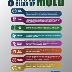 Mold and Homes