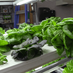 Escalante Students Grow Lettuce in Winter